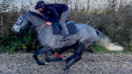 Crossfirehurricane - racehorse for sale